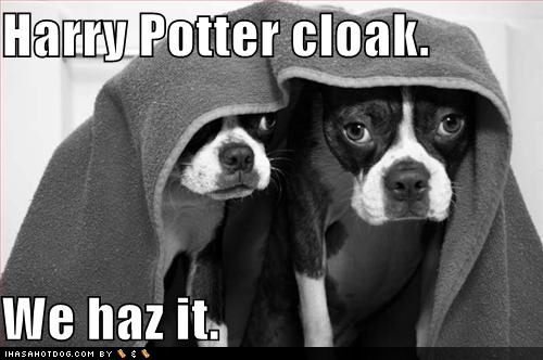 Funny Pictures Harry Potter. Tags: Harry Potter | Leave